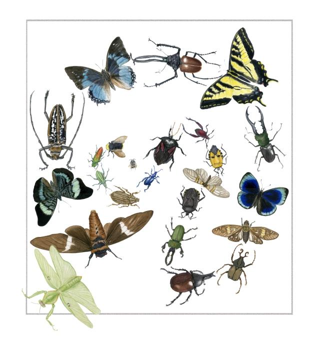 Amazement of bugs 2