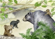 Black bears (children's illus.)