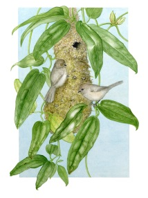 Bushtits on clematis