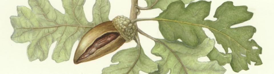FloraFauna