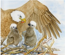 Bald eagles (children's illus.)