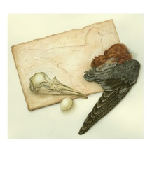 kestrel wing, gull skull, Audubon sketchbook page