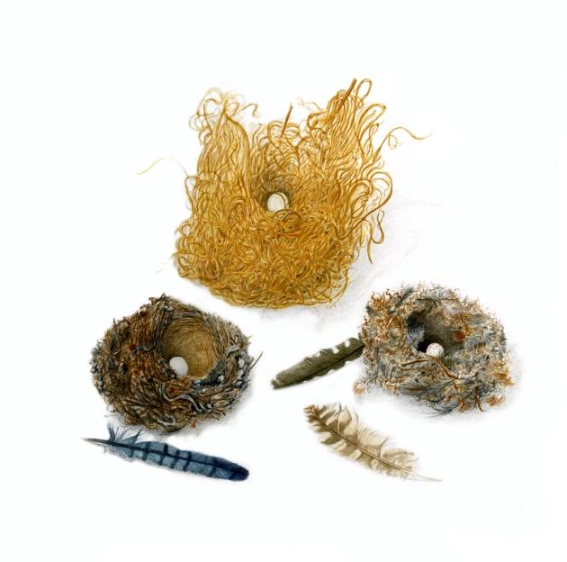 KMcKeehen Nests 72